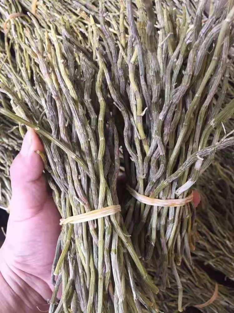 铁皮石斛种子价格、大量收购铁皮石斛、铁皮石斛