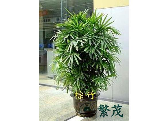 办公室花卉摆放设计、苏州花卉找哪家(在线咨询)、花卉