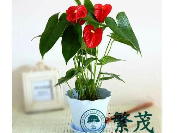 植物,苏州花卉租赁找哪家,苏州植物租赁摆放养护