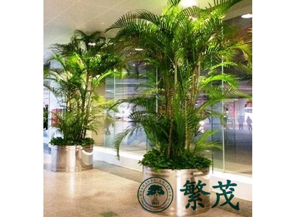植物|苏州花卉租赁找哪家|花卉租摆植物