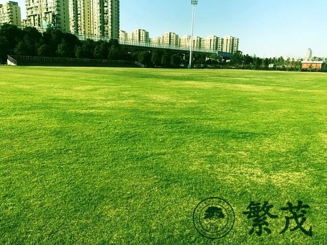 苏州绿化养护找哪家(图)、繁茂树木养护、繁茂
