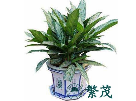 植物|室内花卉植物摆放|苏州专业植物出租养护(优质商家)