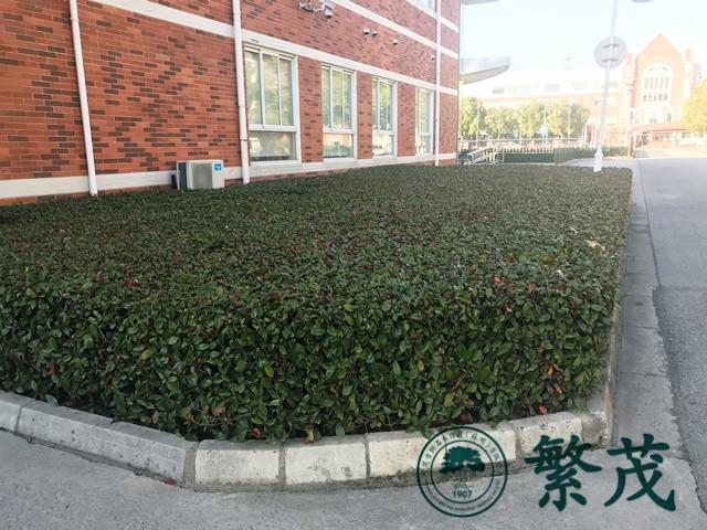 厂区绿化养护|绿化|苏州绿化养护找哪家(查看)