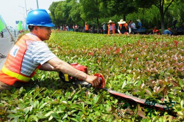 企业绿化养护管理、繁茂绿化养护、绿化
