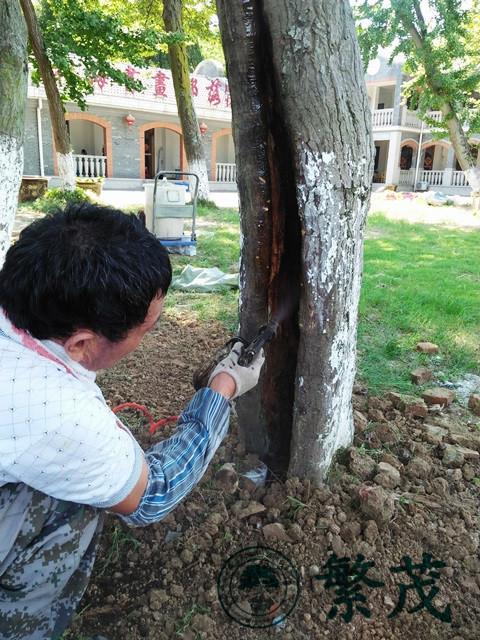 古树名木巡查,繁茂古树保护,古树