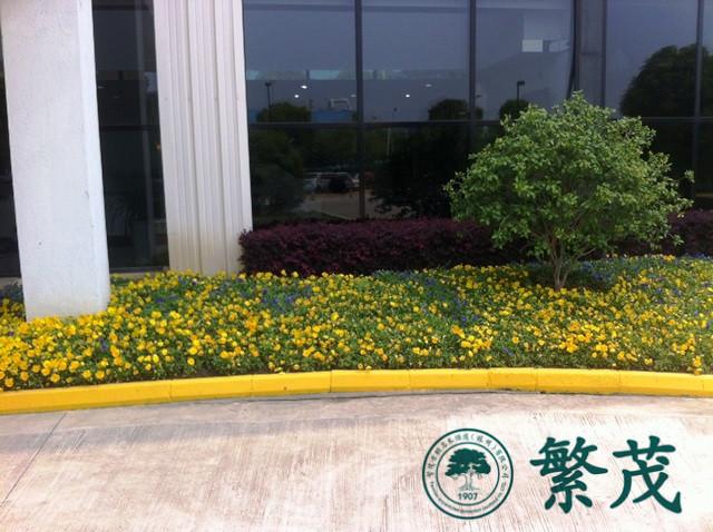 苏州绿化养护哪家专业(图)、绿化养护、绿化