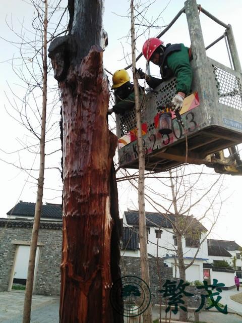 古树名木鉴定、苏州古树名木、繁茂古树保护