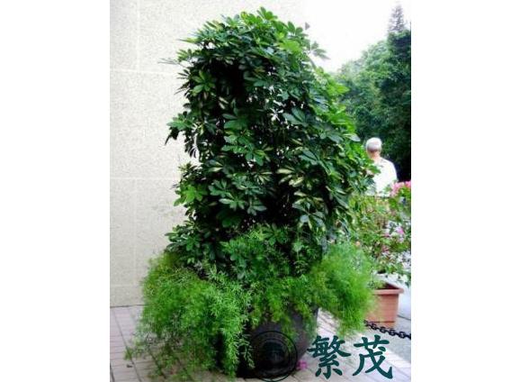 盆栽植物租赁养护_苏州专业植物出租养护(在线咨询)_植物