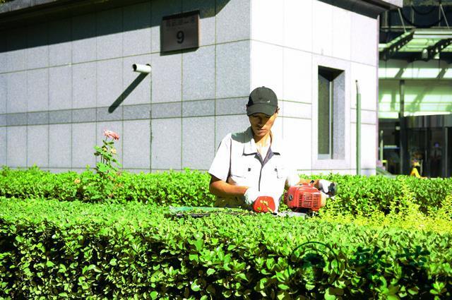 繁茂绿化养护(图)、单位绿化管理、绿化