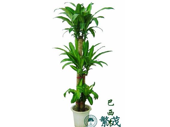 租、盆栽花卉租赁养护、繁茂绿植租摆(优质商家)