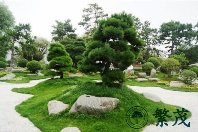 繁茂小区绿化、繁茂、苏州绿化养护哪家强(查看)