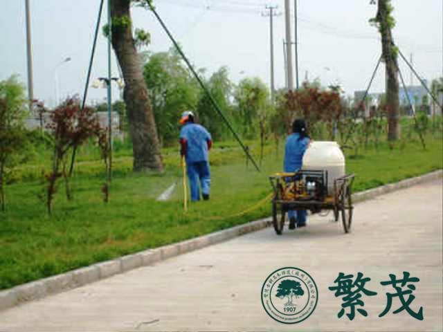 企业绿化维保服务|苏州绿化养护哪家好(在线咨询)|绿化