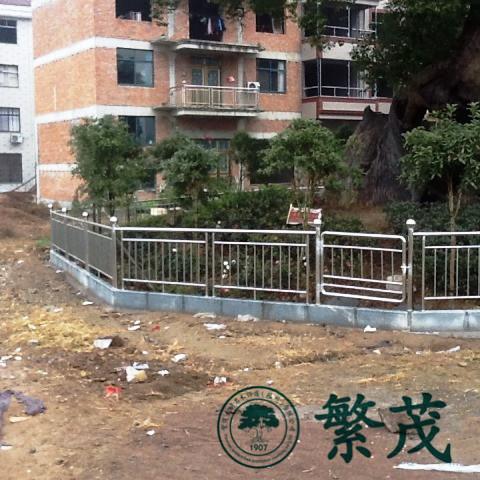 古树名木保护,常州市古树,古树名木抢救复壮(查看)