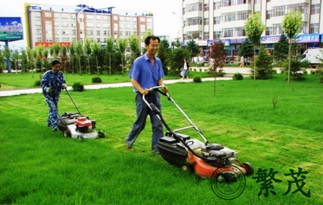 绿化管理、绿化、繁茂绿化养护(查看)