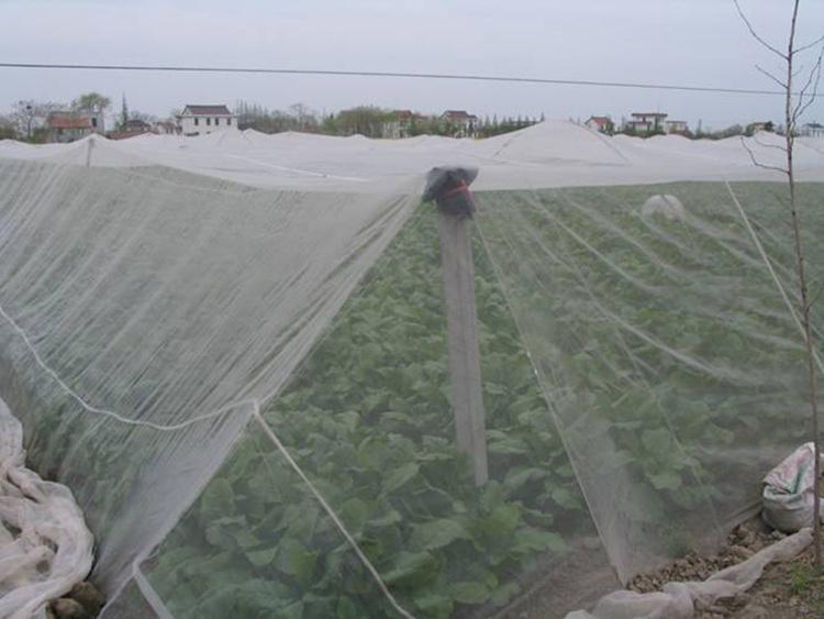 水稻防虫网好用耐盐碱
