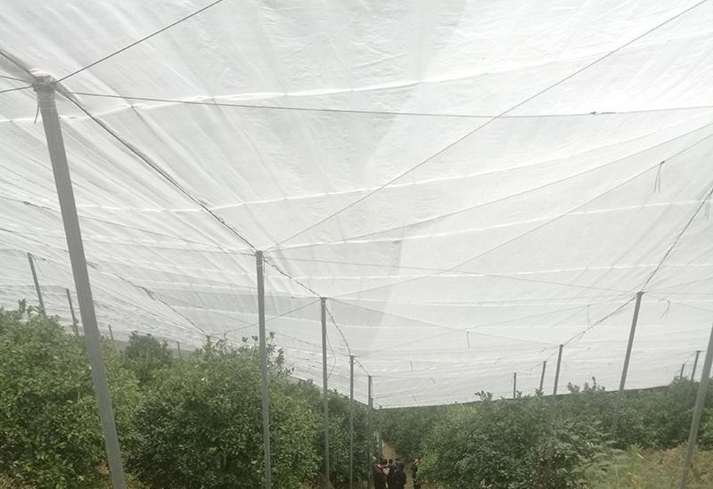 厂家直销抗老水稻防虫网