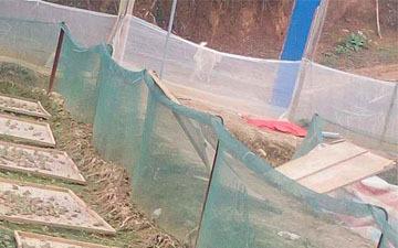 结实的青蛙围网耐氧化的纱网更结实的网子