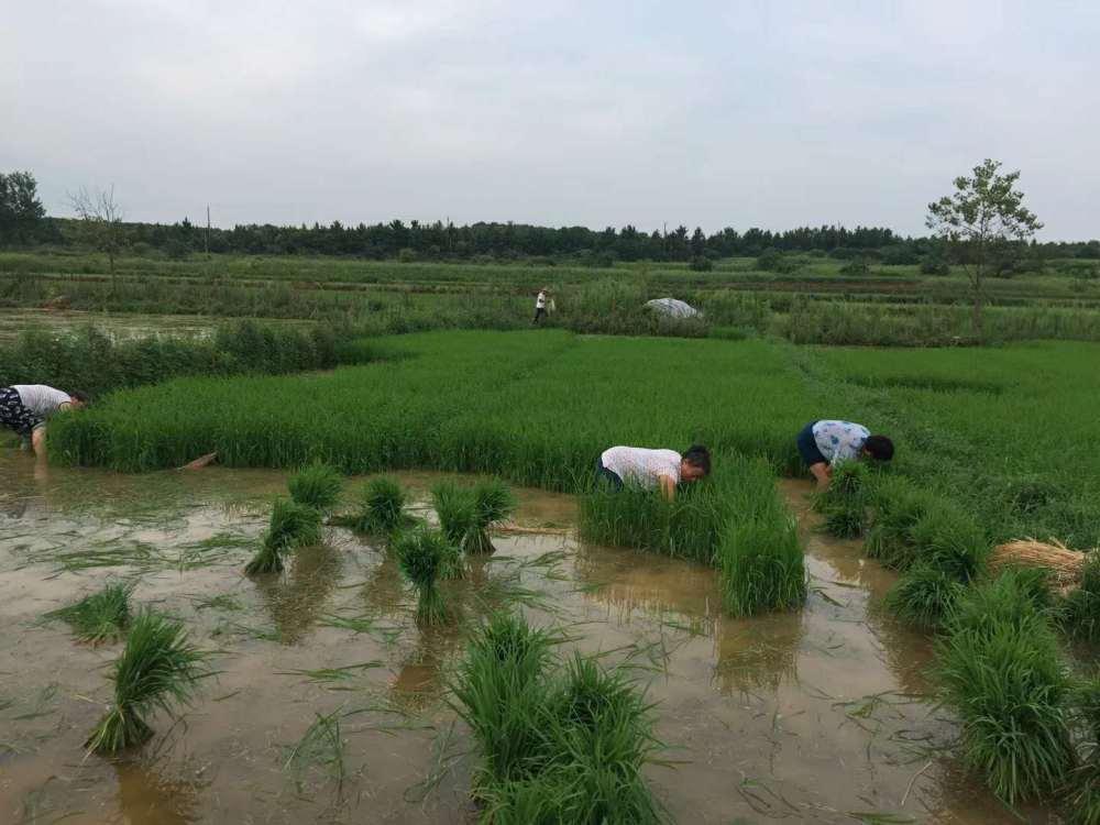 南昌介山村富硒大米(图)、真正特产富硒大米品牌、特产富硒大米