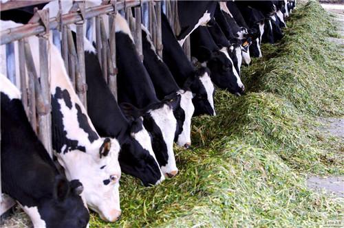 奶牛预混料,奶牛饲料,厂家直发