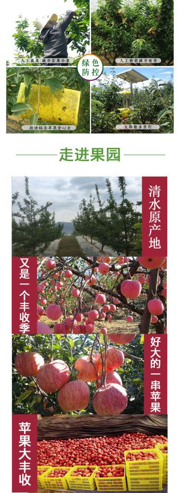 花牛苹果产地新鲜国产蛇果水果花牛苹果一斤多少钱粉面甜苹果