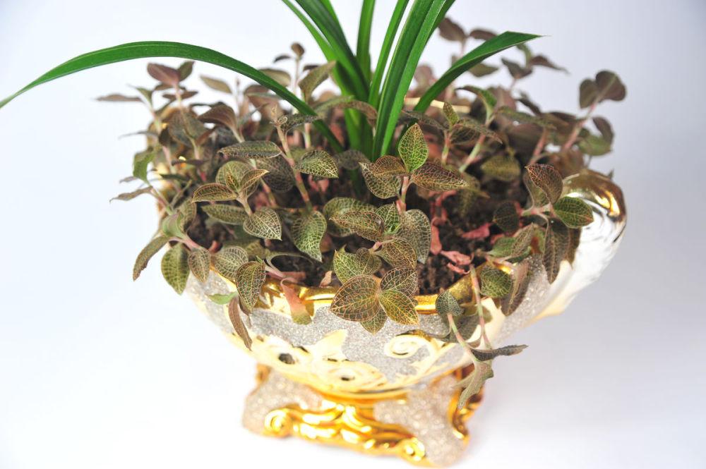御贵草金线莲种植时时刻刻关注消费者的需求