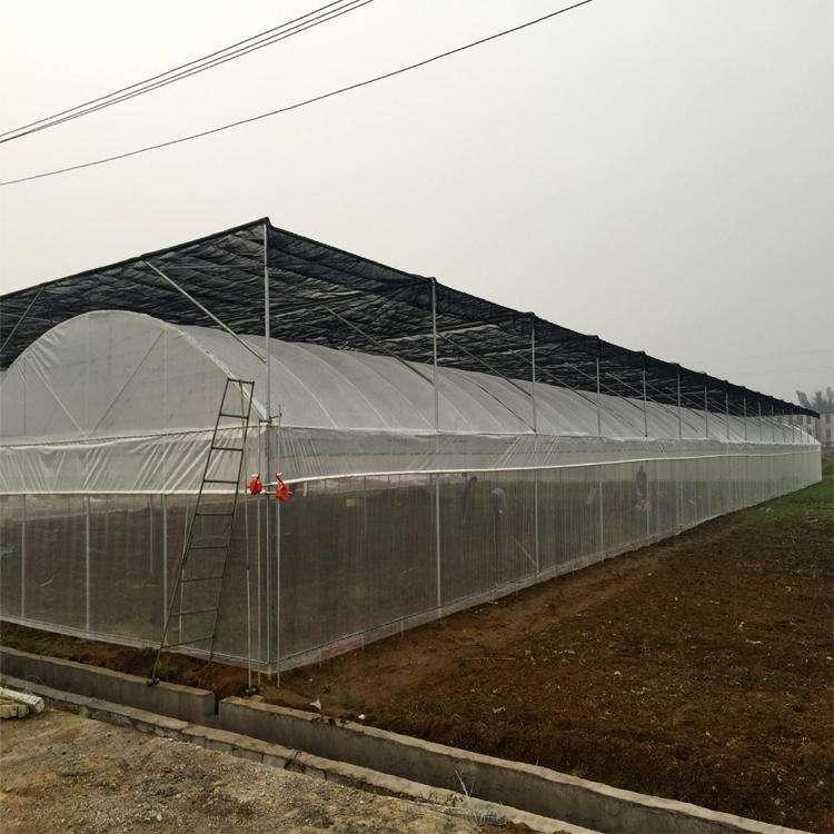 防虫网价格、蔬菜防虫网、威海防虫网