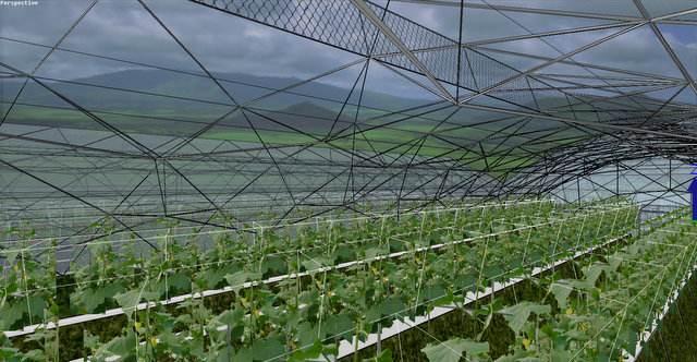 40目防虫网厂家、宜春市防虫网、烟叶蔬菜防虫网