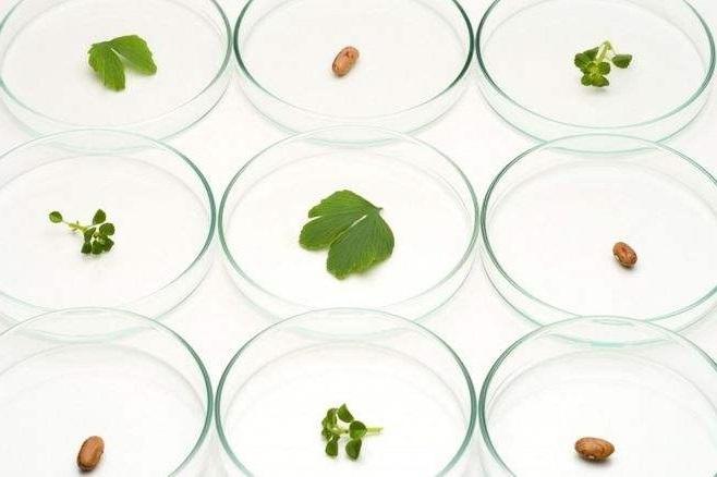 NAGEL液相色谱柱、化学及生物分析产品(优质商家)