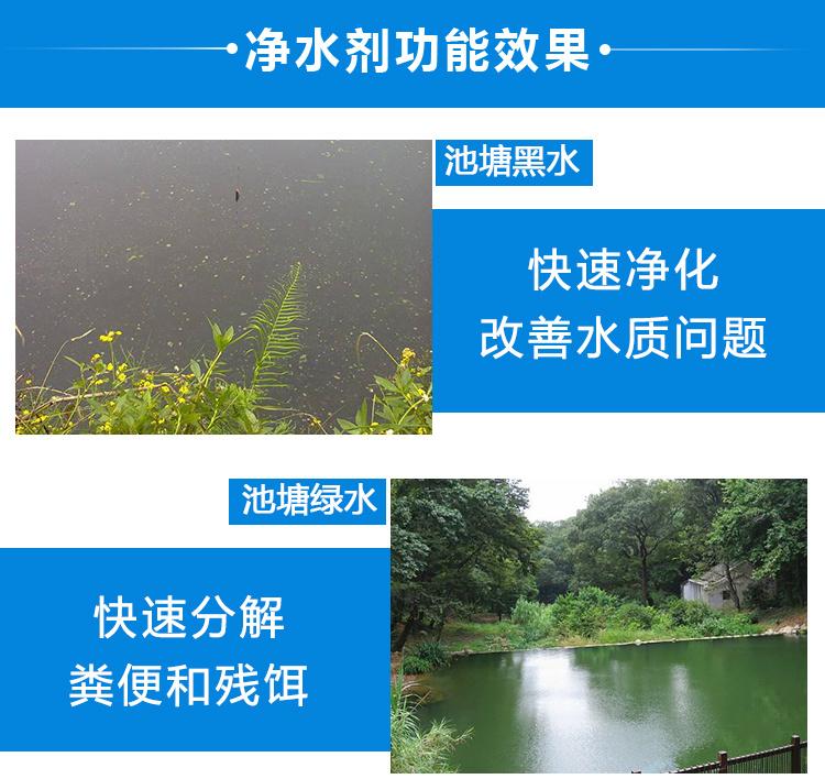 微生物净水剂有效预防养殖水体常见水质问题杀菌除臭活  水