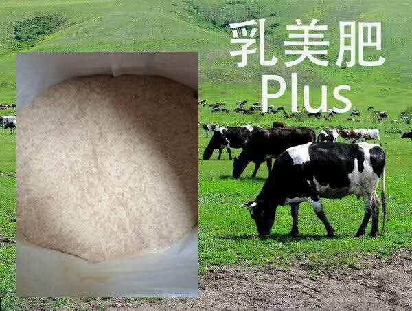 马来西亚艾可公司过瘤胃脂肪粉脂肪酸钙提高产奶量缓解热应激