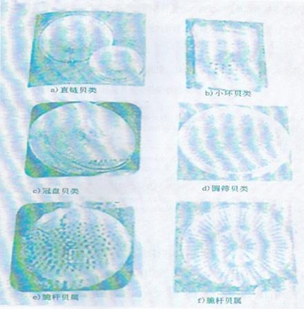贝壳粉效果图、通化恒瑞达国际贸易有限公司(在线咨询)