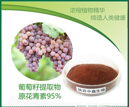 陕西中鑫葡萄籽提取物原花青素OPC95%