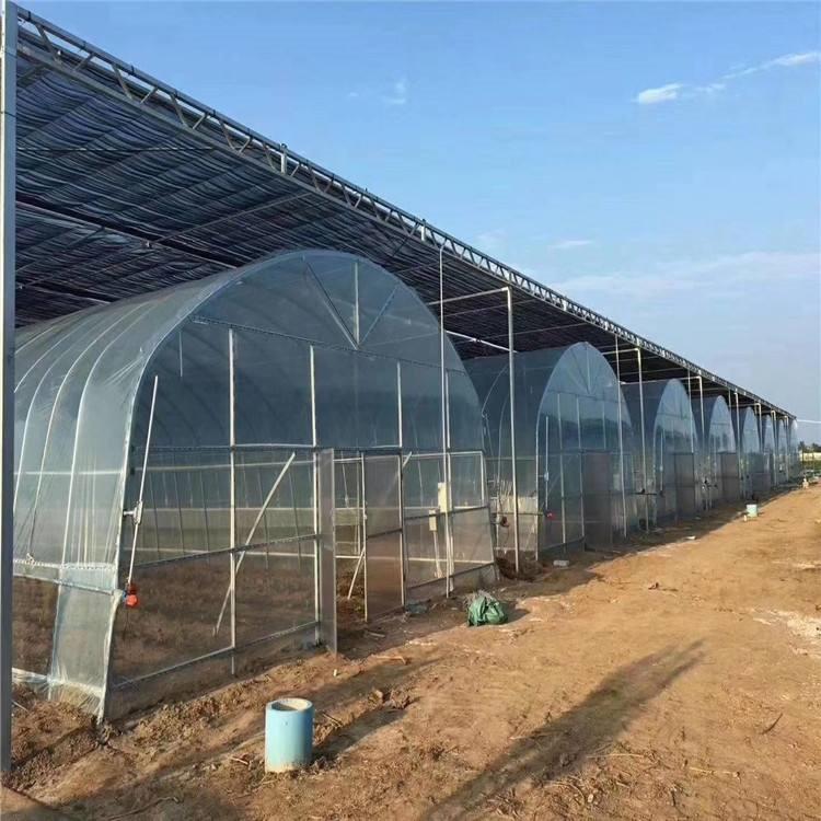 现代化大棚 阳光板温室厂家 育苗大棚建设