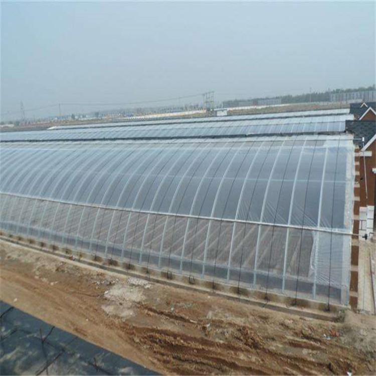 日光温室 温室供应蔬菜大棚 日光大棚承建