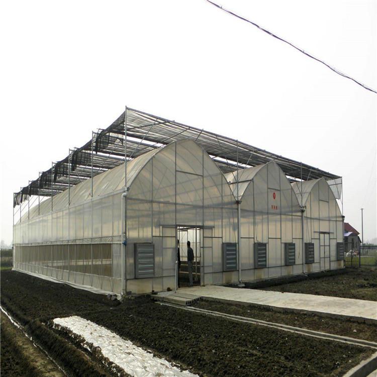 大棚建设 连栋薄膜温室造价 花卉温室