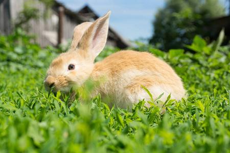 兔饲料有哪些种类,选那种饲料好