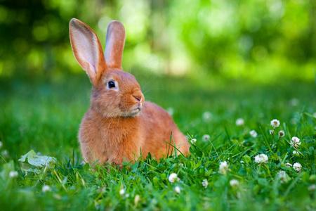 兔饲料怎么喂选哪家饲料