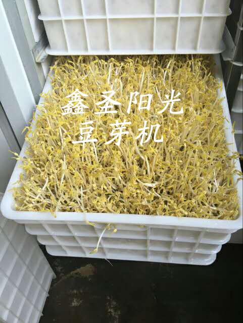 豆芽机可以发哪些芽苗、荆州豆芽机、鑫圣阳光(查看)