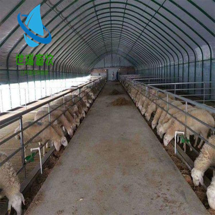 山羊养殖大棚搭建 绵羊养殖棚建设 羊棚设备安装
