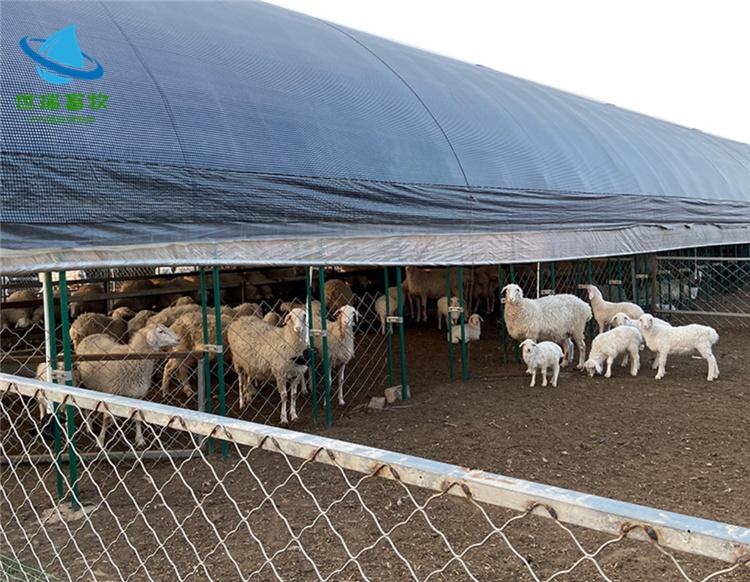 养羊大棚建设、矿区养羊大棚、养羊大棚建设