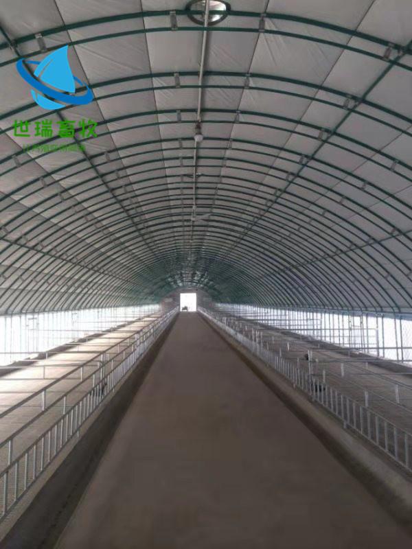 养羊大棚建设、世瑞畜牧大棚工程(在线咨询)、新荣养羊大棚