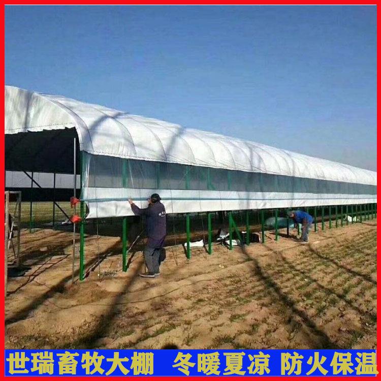 搭建养羊大棚、世瑞畜牧设备、潍坊养羊大棚
