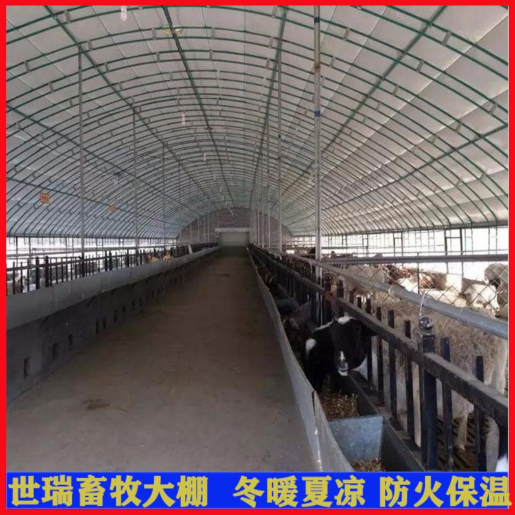 济南养羊大棚、世瑞畜牧设备、搭建养羊大棚